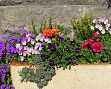 Flower Box Flowers Garden Container Plant Planters