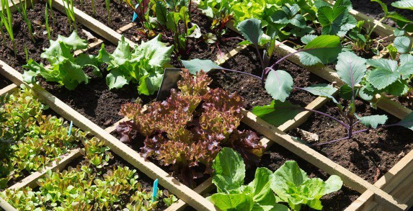 Winter vegetable garden