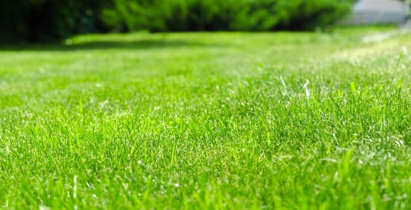 Revitalise your tired lawns