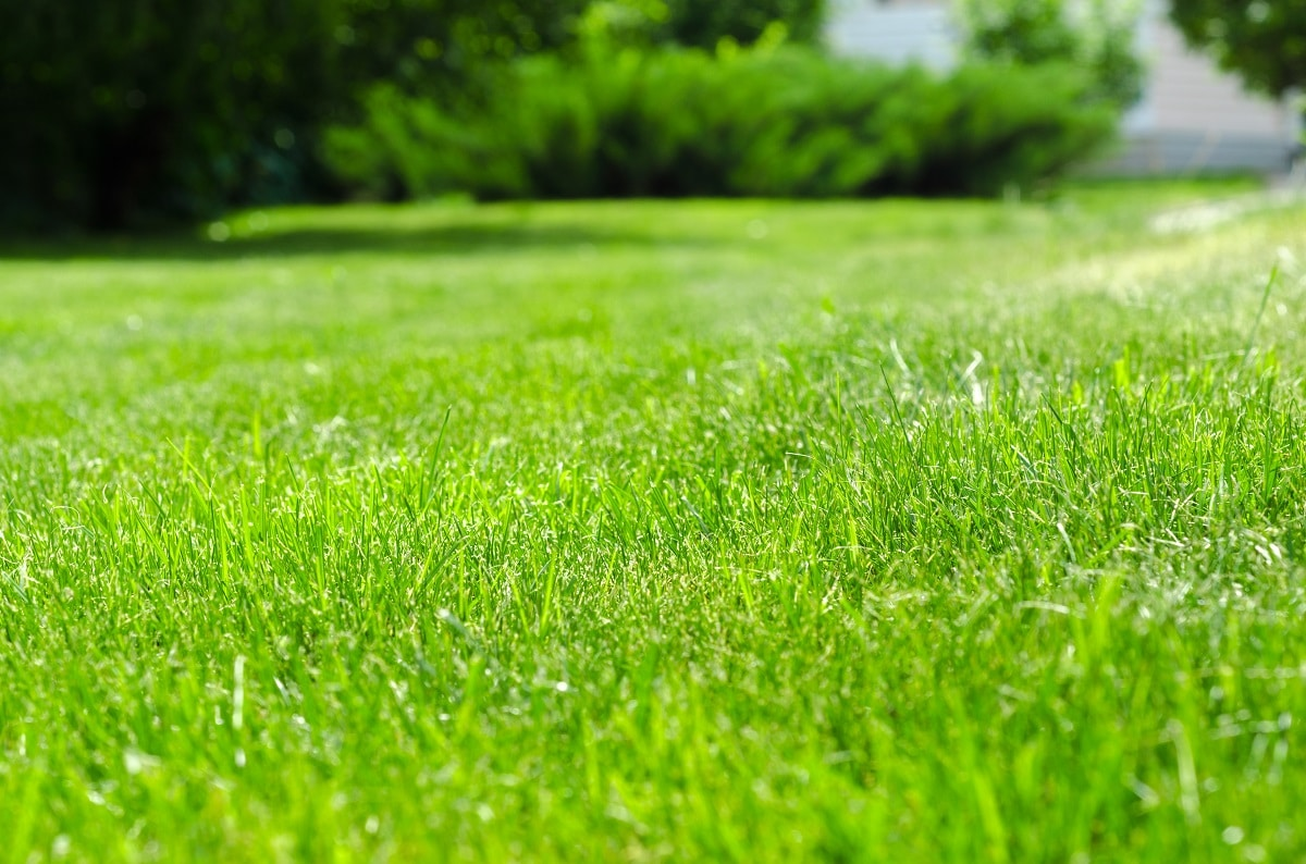 Old Tired Lawn? Understanding the Signs, Causes, and the Cures