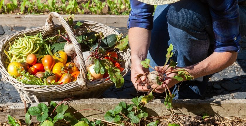 Your complete guide to building a vegetable garden in Western Australia