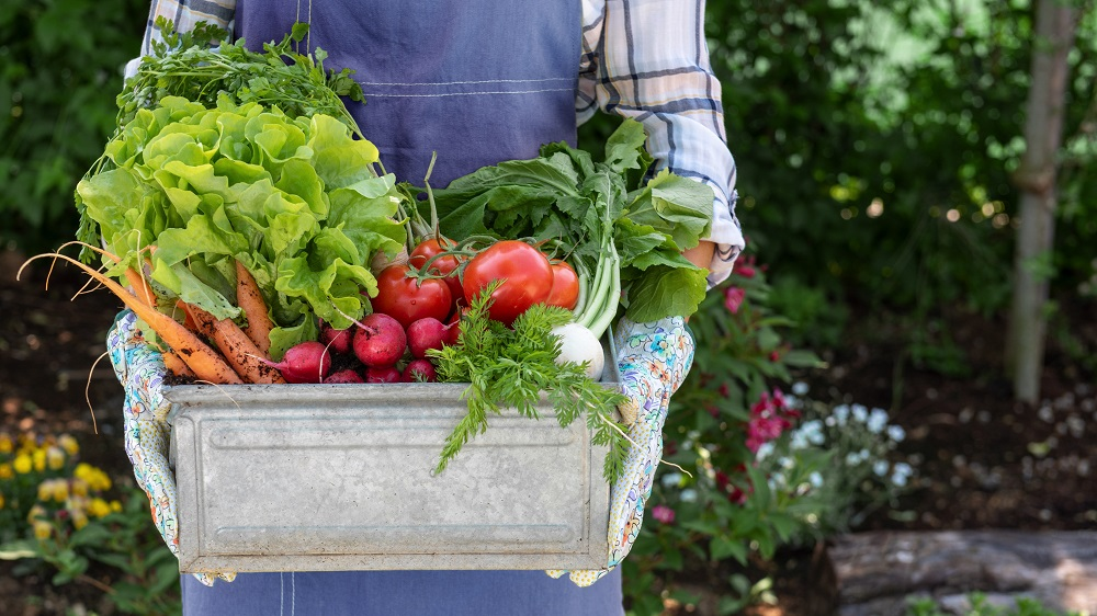 Harvesting your garden must be done at the right time