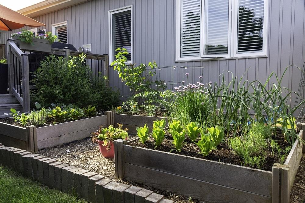 Proper planning is essential when building a successful veggie garden