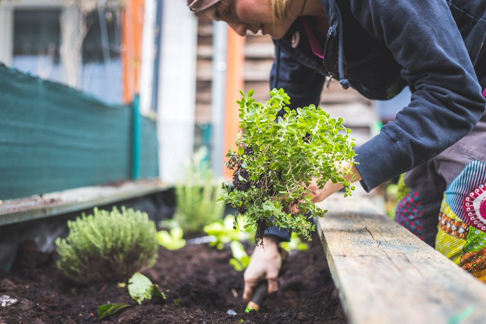 Choose vegetables that match the growing conditions of the soil