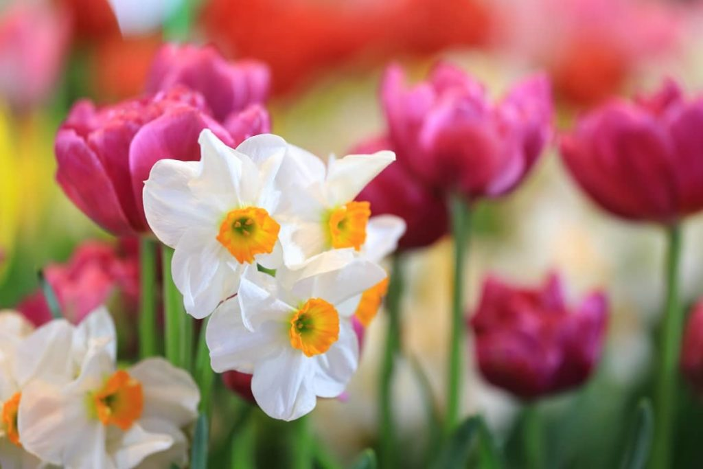 Planting bulbs in your garden