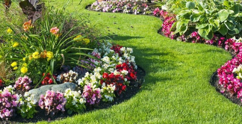 Perennial flowers are low maintenance but they enhance the appearance of your lawn.
