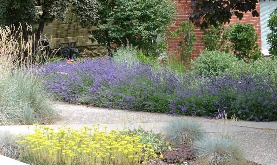 Ground covers doesn't have to be mowed, thus reducing landscape maintenance.